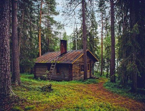 Se tutti vivessero su una casa sull'albero